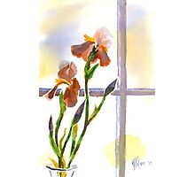 Irises in the Window Photographic Print