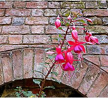 Inner City Fuchsia Photographic Print
