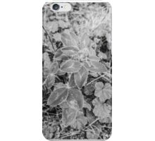 Leaves with dew drops iPhone Case/Skin