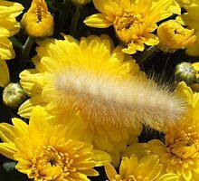 The Caterpillar by Hope Ledebur