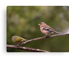 Dear, I still love you even if you do look different !  Chaffinch and Silver Eye. Canvas Print
