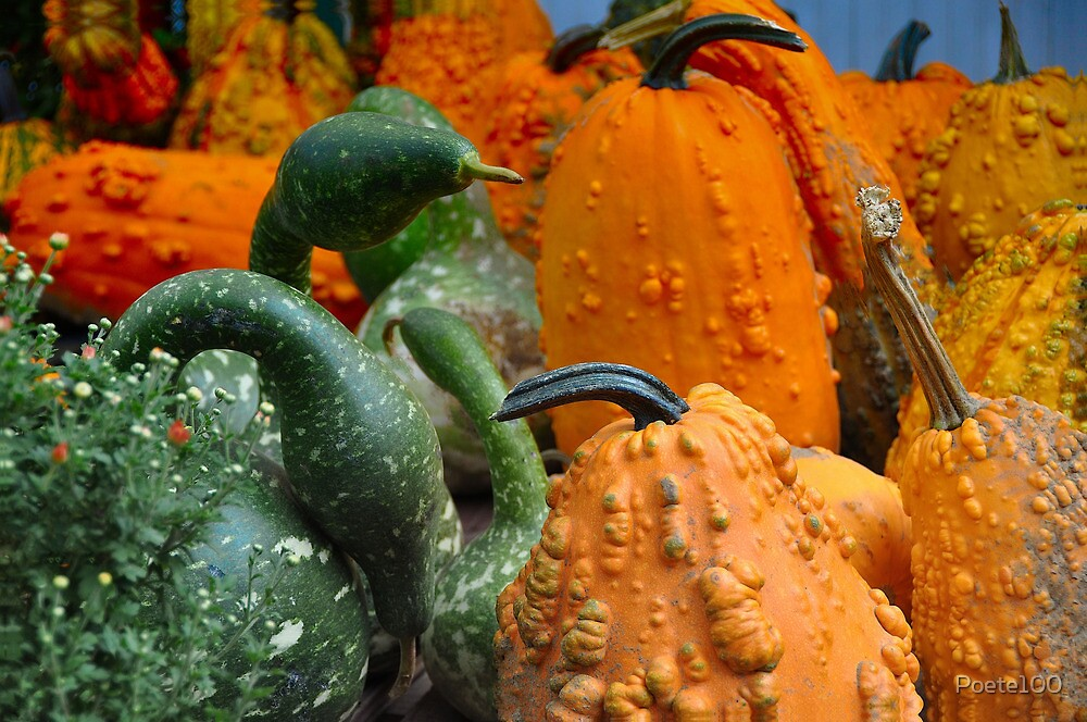 Oh My Gourds by Poete100