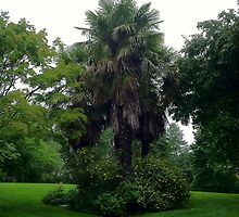 Tree Grouping Carl S. English, Jr., Botanical Gardens by naturescopes