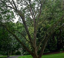 Majestic Tree Carl S. English, Jr., Botanical Gardens by naturescopes