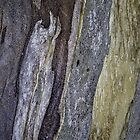 Eucalypt bark detail by Trudi Skinn