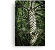 Monkey Puzzle Tree Canvas Print