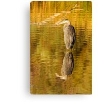 Reflective Great Blue Heron Canvas Print