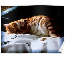 Purrfectly Peaceful Poster