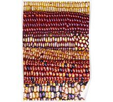 Amazing Indian Maize (Corn) Poster