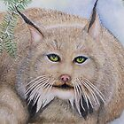 """LINUS""  Canadian Lynx, First Snow by ShireenJackson"