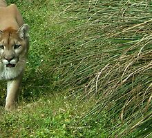 Panther in Grass by Anne Drennen