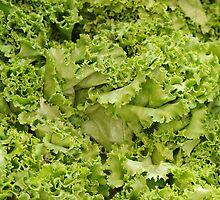 Lettuce Frills by John Ayo