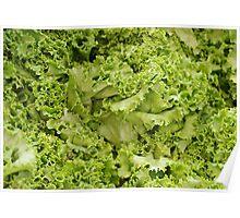 Lettuce Frills Poster