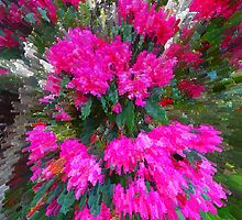 My cerise rhododendrum Kilmore East VIC Australia by Margaret Morgan (Watkins)