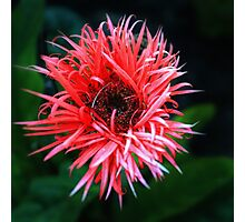 Red Flower on Green Background Photographic Print