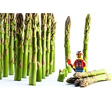 Asparagus Harvest Photographic Print