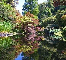 Melzi Reflection by Adrian Alford Photography
