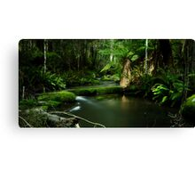 On the way to Lower Kalimna Falls Canvas Print