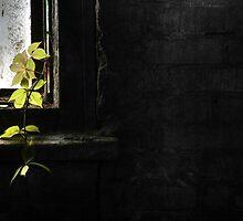 28.9.2013: Nature Comes In by Petri Volanen
