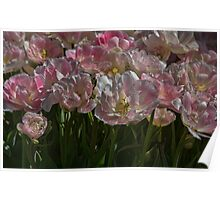 Tulips in Pastel Poster
