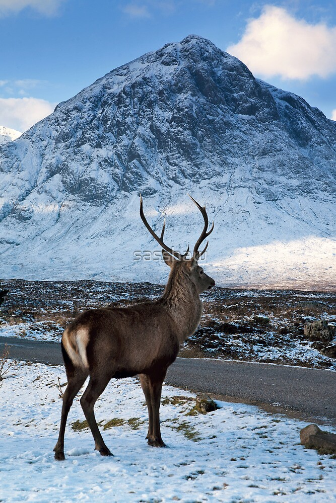 Magestic Wild Stag with Mountain Backdrop by sasshaw