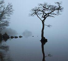 Sunken Tree in Fog by sasshaw