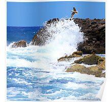 Seagull Over Akko Israel -square Poster