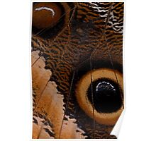 Owl Butterfly Wing Macro Poster