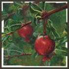 Pomegranate by ImogenSmid