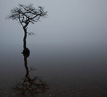 Lonely Tree by sasshaw