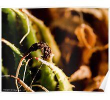 cactus in macro Poster