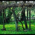 grape arbor by KSKphotography