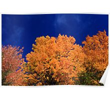 Tops of Autumn Trees Poster