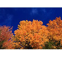 Tops of Autumn Trees Photographic Print
