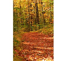 A path through the fall colors Photographic Print