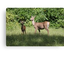 Momma Deer and her Babe Canvas Print