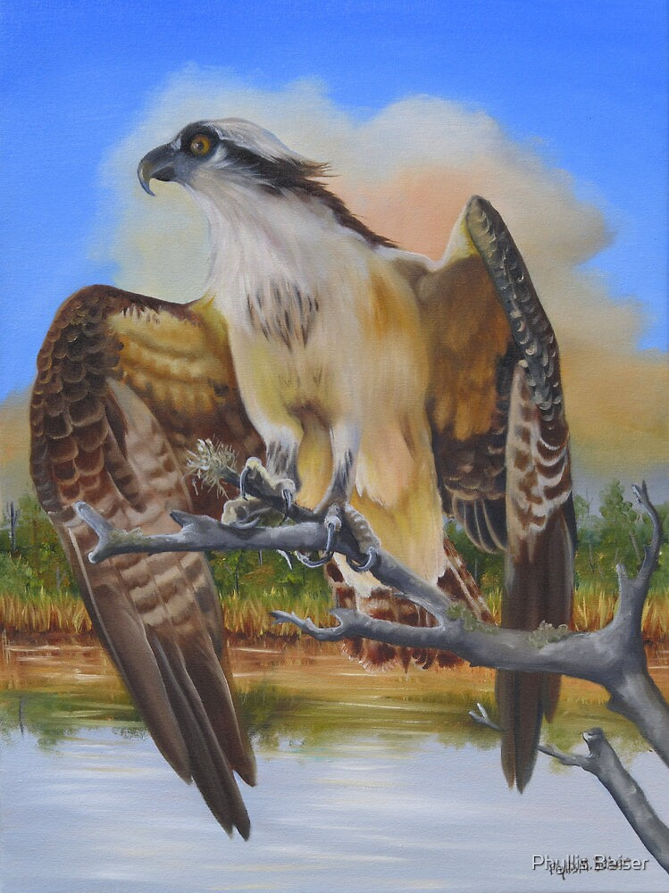 Intent Osprey by Phyllis Beiser