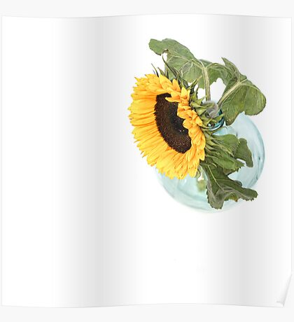 Sunflower in a Vase.... Poster