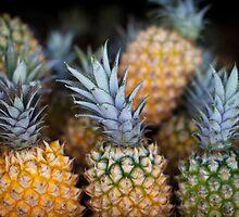 Pineapples by sedge808