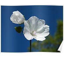 White flower, blue sky Poster
