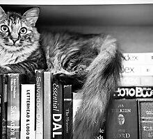 Bookshelf Kitten by Stephanie Sherman