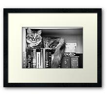 Bookshelf Kitten Framed Print
