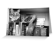 Bookshelf Kitten Greeting Card
