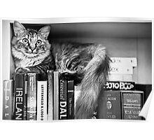 Bookshelf Kitten Poster