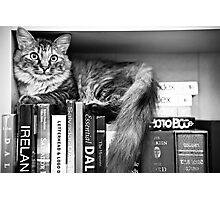 Bookshelf Kitten Photographic Print