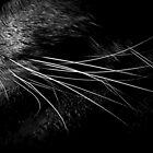 Whiskers in Noir and Blanc by trueblvr