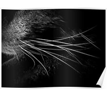 Whiskers in Noir and Blanc Poster