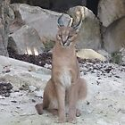 Caracal by Caroline Clarkson