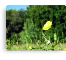 wild Butter cup Canvas Print
