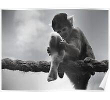 London Monkey Sock Poster